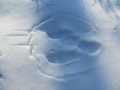 野兎の足跡