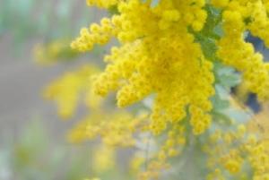 黄色のリース3