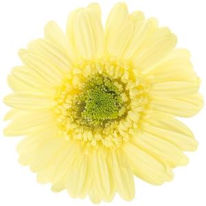黄色のリース2