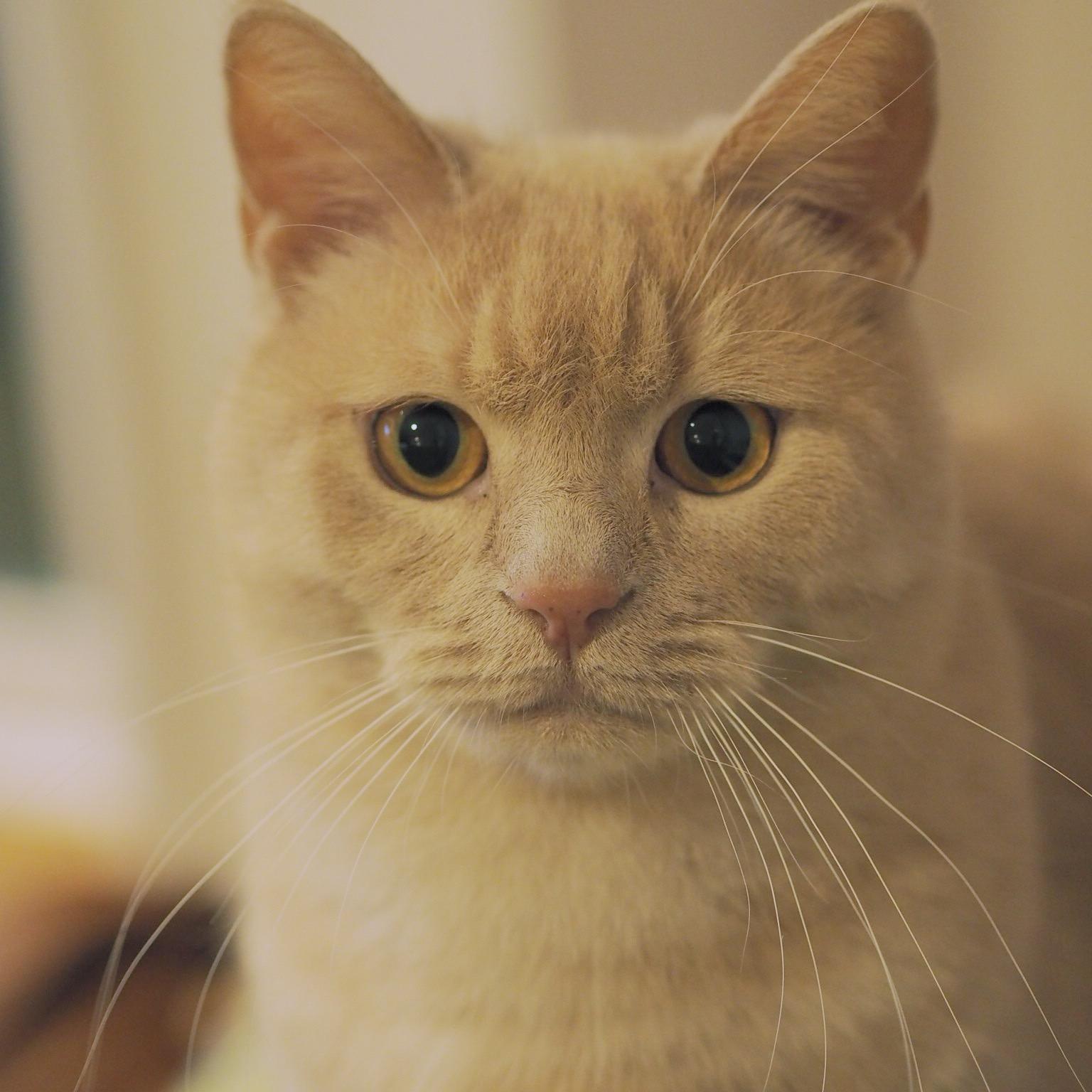 タレ目の猫