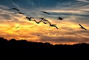 高出来高渡り鳥