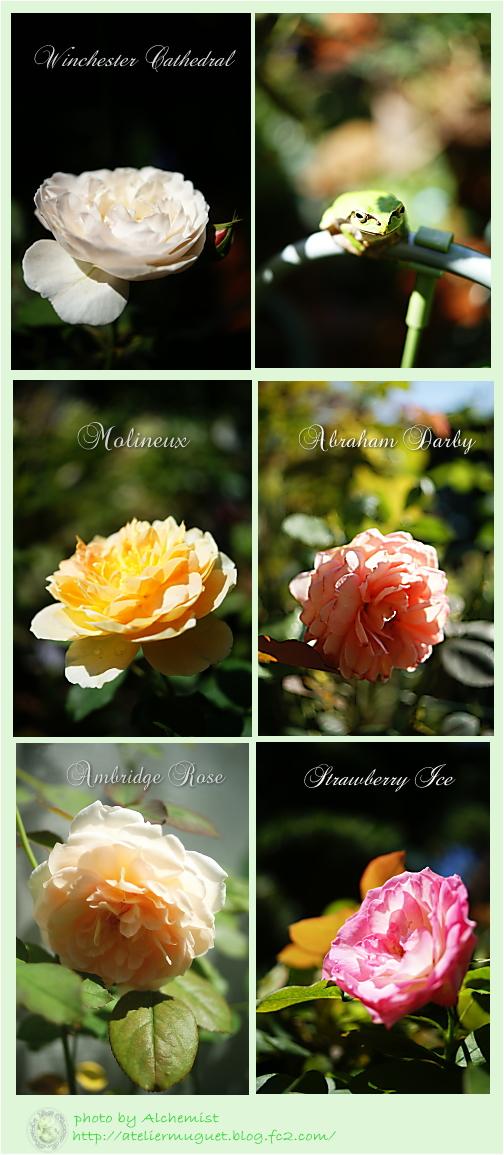 9re-roses.jpg