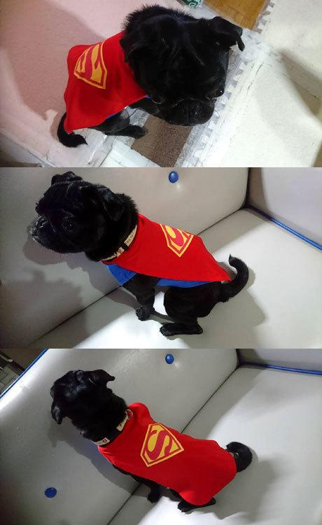 スーパーマンにもなりました