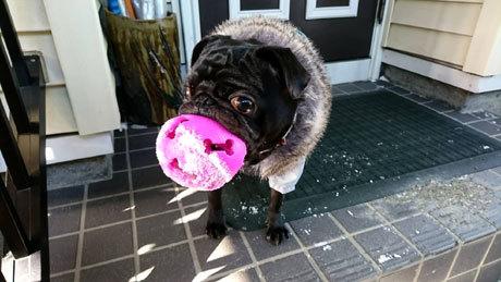 ピンクのボール