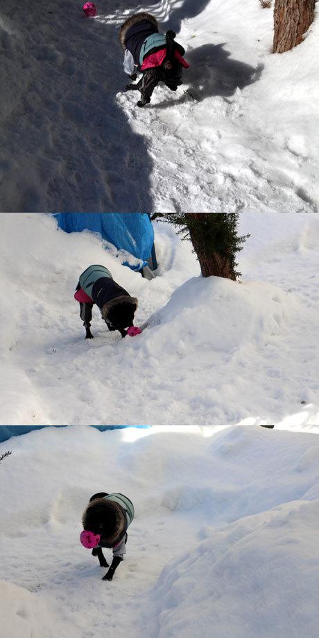 雪の中だって走る
