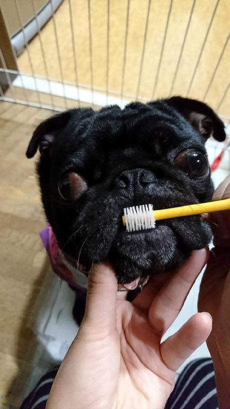 今朝の歯磨き