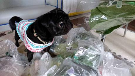 小松菜もビックリ