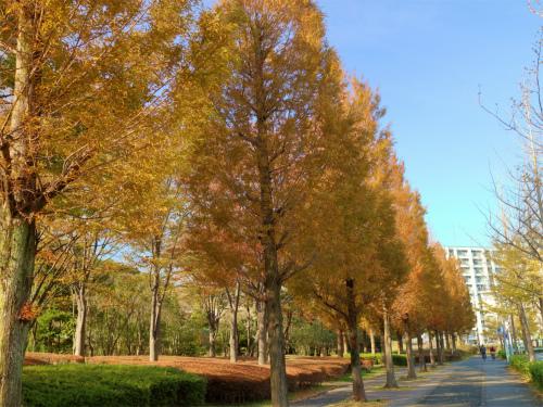 インスタ映えする横浜の紅葉でも巡ってみようかなポタリング