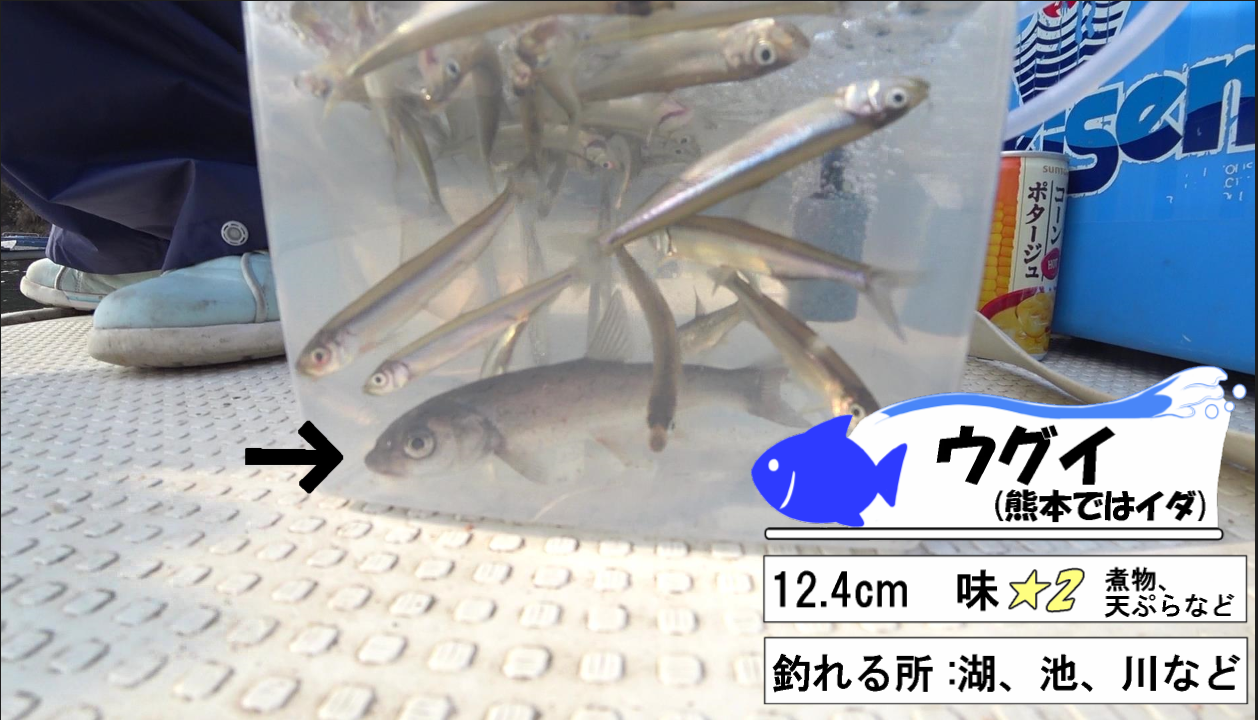 ワカサギ釣り 記事 (9)