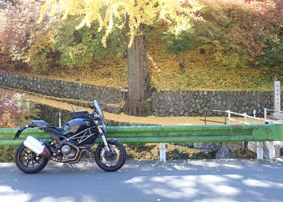 県道53号成木