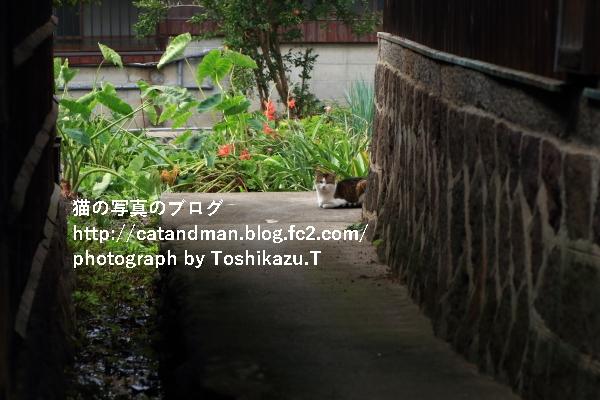 IMG_9461s.jpg