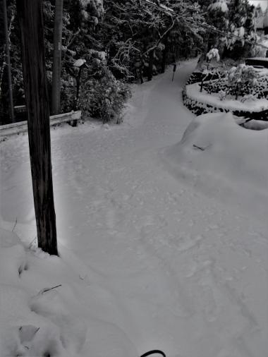 斜め十字路の野生の動物たちの足跡