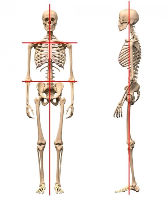 身体重心線