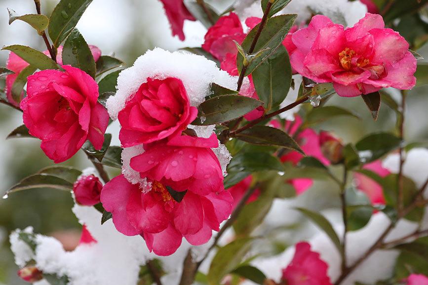 snow2633.jpg