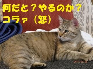 blog170926_1.jpg
