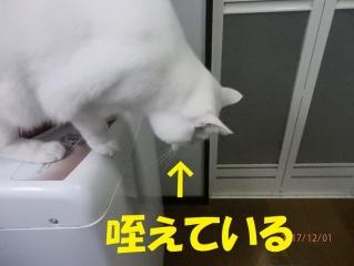 blog171202_3.jpg