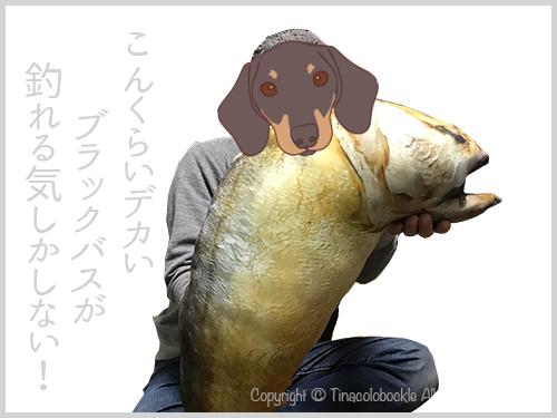 20180101Thai_Fish-6.jpg