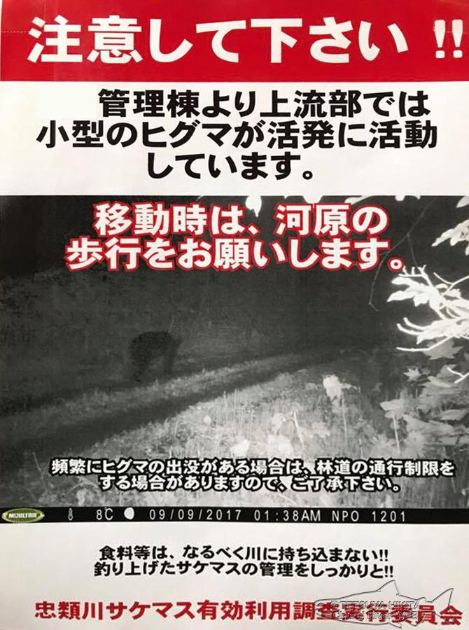 Bear-danger.jpg
