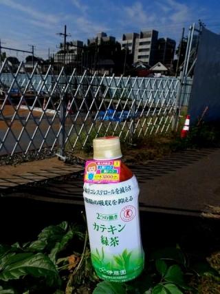 カテキン緑茶追加 (1)