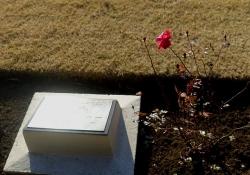 20180103英連保墓地4