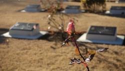 20180103英連保墓地3
