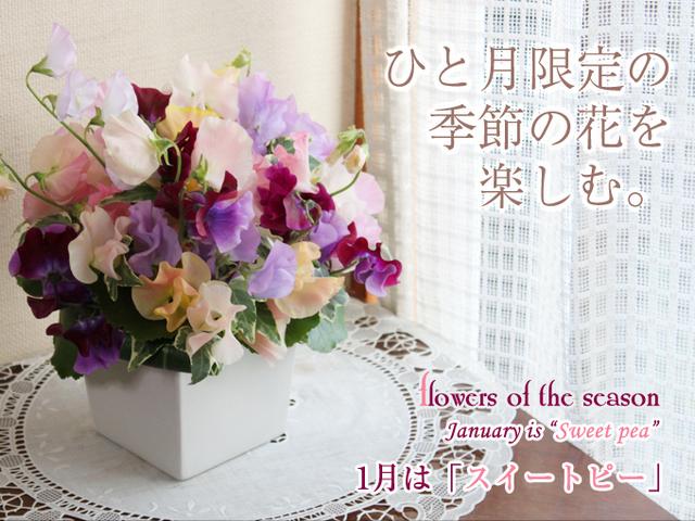 春 花 プレゼント アレンジ スイートピー 花束 誕生日 誕生花