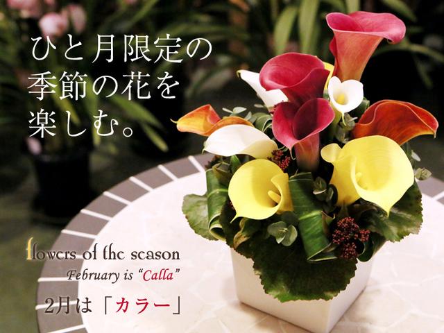 カラー 誕生花 サプライズ 季節の花