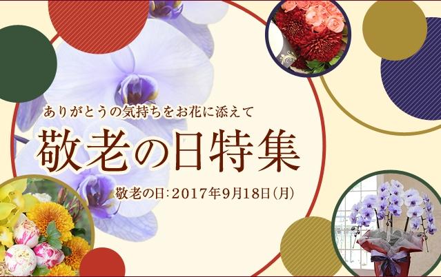 敬老の日 プレゼント 青 胡蝶蘭 人気 アレンジ 花束 秋
