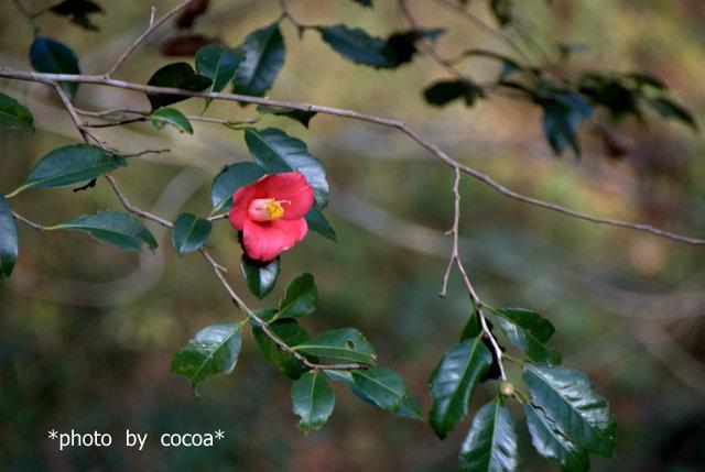DSC_0009 2007-12-01 12-20-33