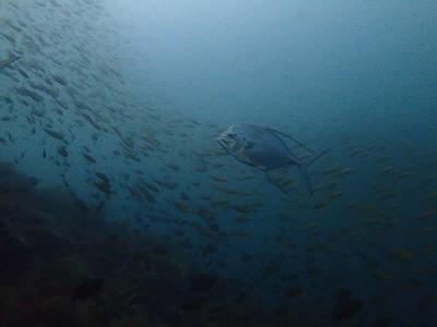 タオ島 ダイビング サウスウエスト