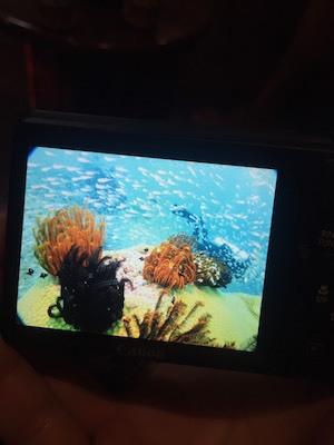 タイ シミラン ダイビング