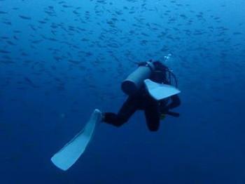 タオ島、ダイビング