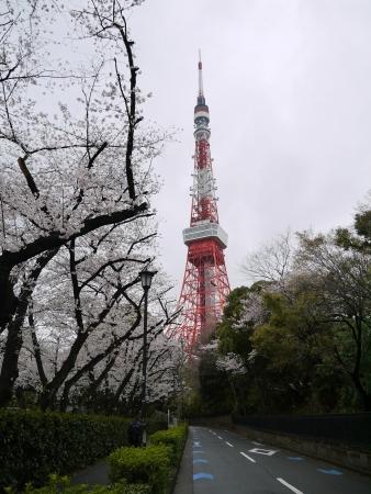 東側から見た東京タワー