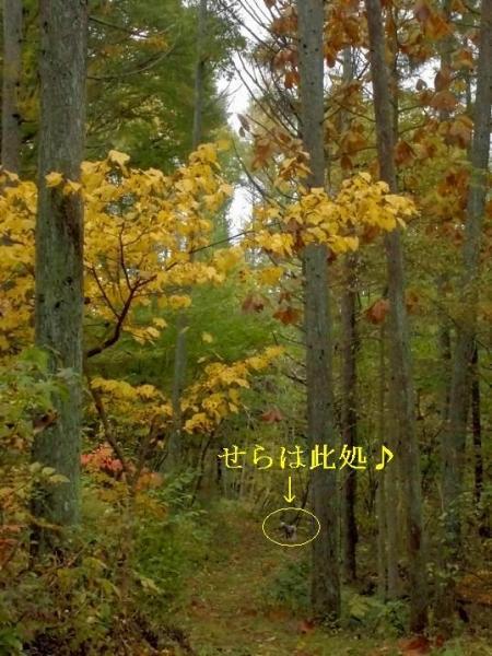 今年も林檎畑ラン4