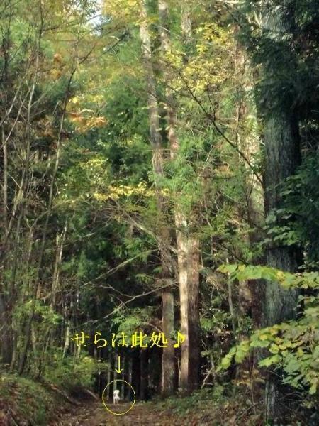 今年も林檎畑ラン5