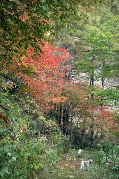 紅葉の森さんぽ16