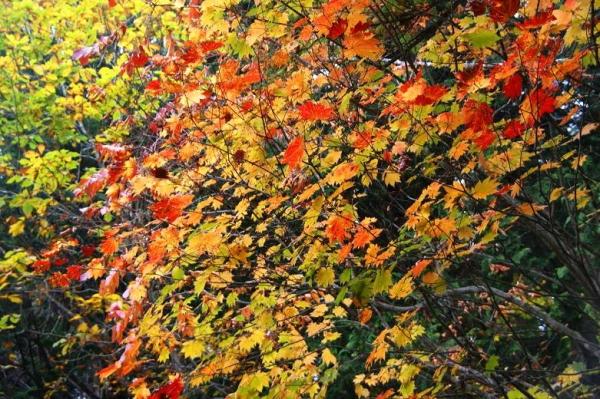 紅葉の森さんぽ17