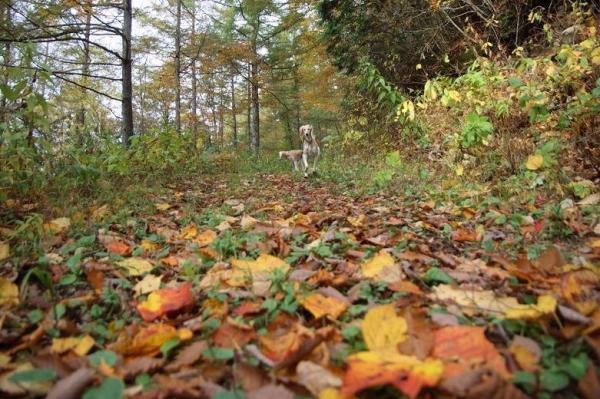 紅葉の森さんぽ18