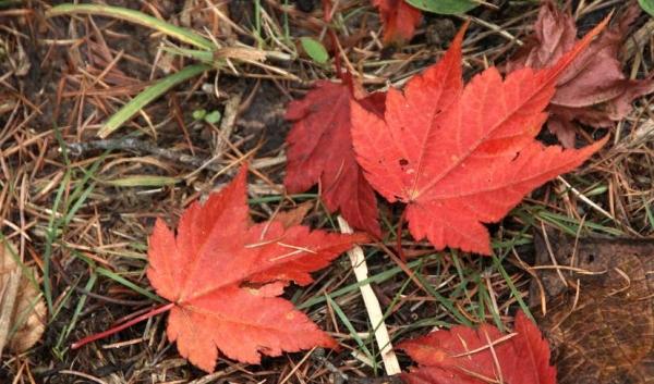 紅葉の森さんぽ19