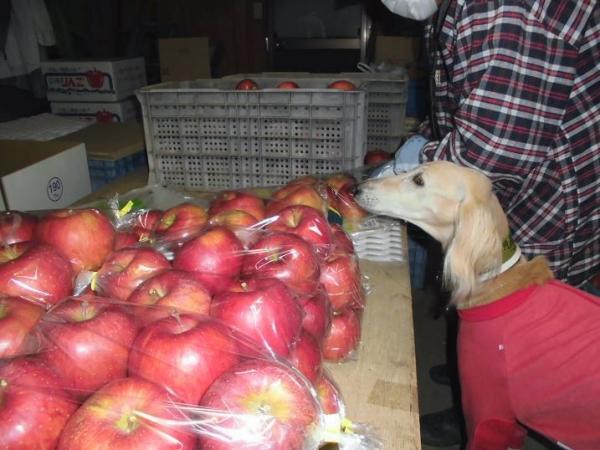 林檎も木々も彩かに17