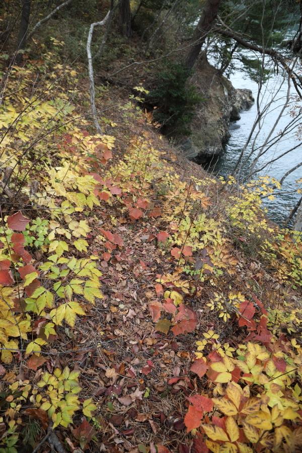 H29002685M4砥粉色とのこいろ黄檗色きはだいろ淡萌黄うすもえぎ赤橙あかだいだい