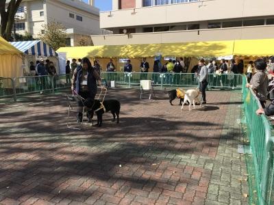盲導犬のデモンストレーション