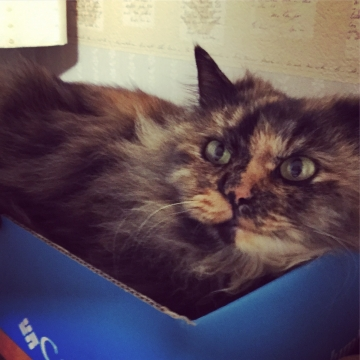 箱好きアウラ