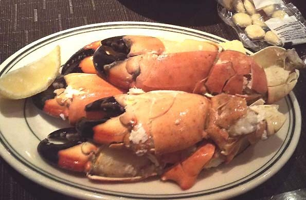 20171016 Stone Crab 21cm DSC_0578
