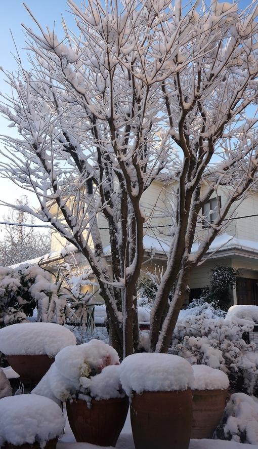 20180123 大雪の朝 18㎝ DSC02469