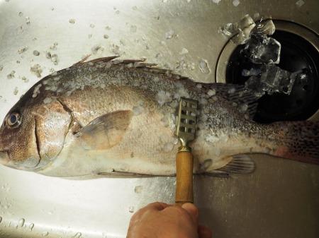 コロダイ刺身とあら鍋035
