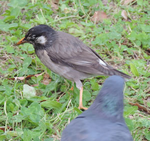 20170503何の鳥blog01