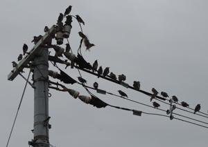 椋鳥blog01