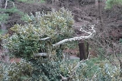 箱根で温泉1712