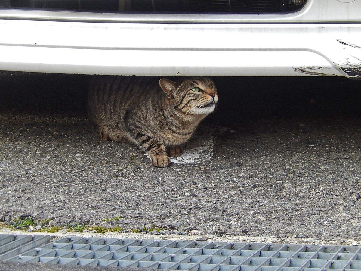匂いが気になる猫